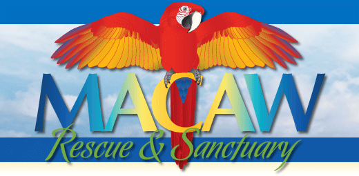 macaw rescue and sanctuary