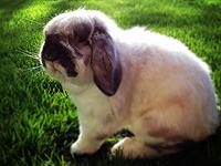 Thumper-sm